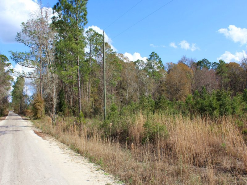 36 Acres-lot 5 Tall Pines : Starke : Bradford County : Florida