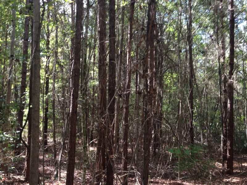 20 +/- Ac Near Lake Simmie : Brundidge : Pike County : Alabama