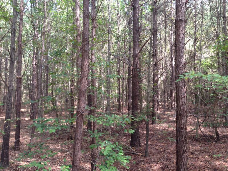 16 +/- Ac Near Lake Simmie : Brundidge : Pike County : Alabama