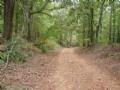Timber Investment & Hunting Auburn