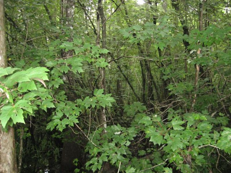 4000+/- Acres Of Timberland : French Settlement : Livingston Parish : Louisiana