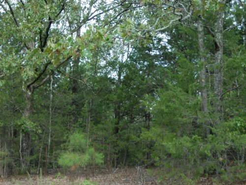 40 Acres Of Timber Land : Conway : Faulkner County : Arkansas