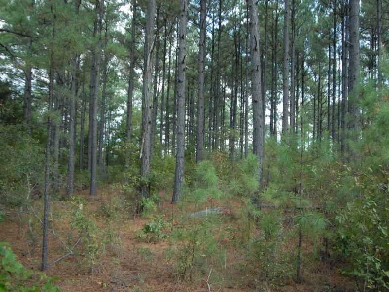 40 Acres Timber Land : Damascus : Faulkner County : Arkansas