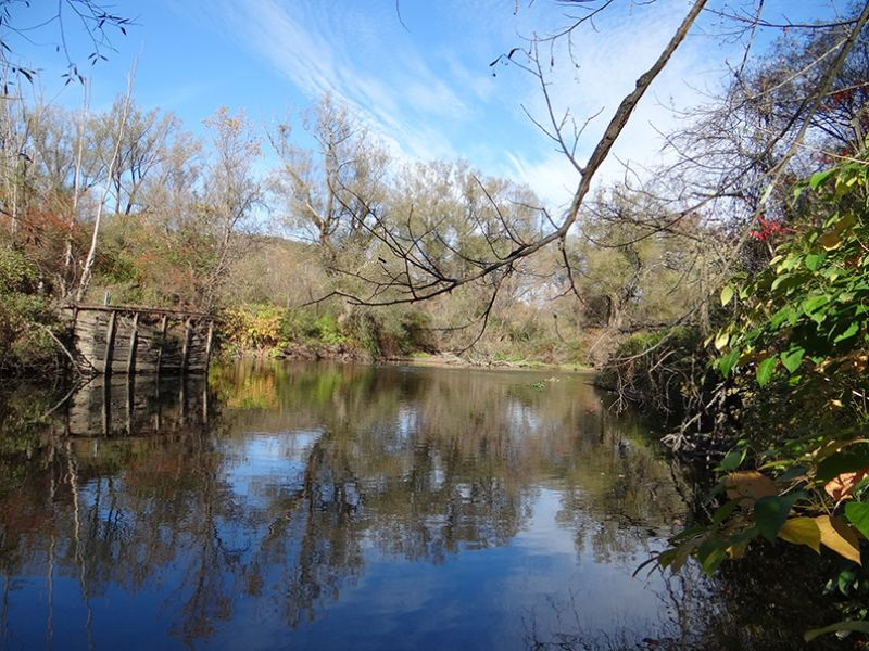 37 Acres Trout Stream Woods : Maryland : Otsego County : New York