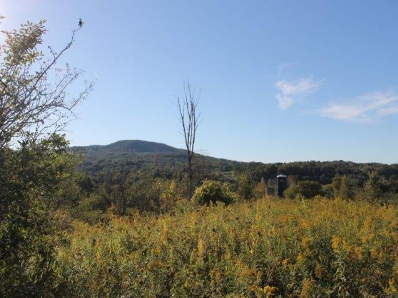 8 Acres Adirondack Mountain Views : Fairfield : Herkimer County : New York