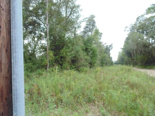52. 5 Acres (a-421) : Hawthorne : Alachua County : Florida