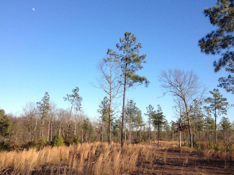 263 Acres : Montross : Westmoreland County : Virginia