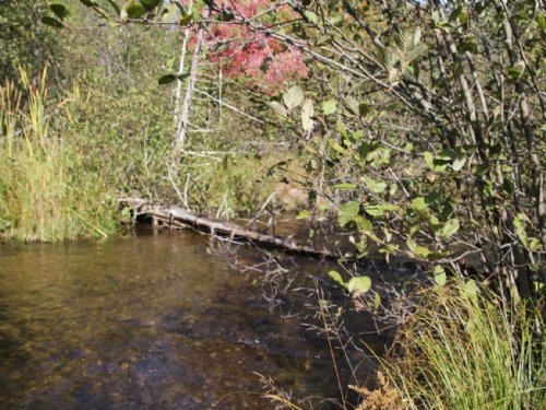 Pigeon River Hunting Property : Gaylord : Otsego County : Michigan