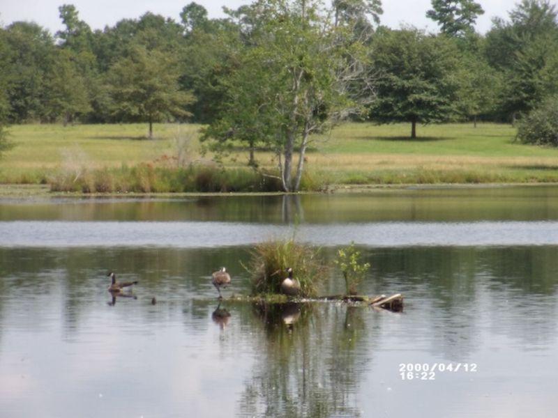66.8 Acre Development Tract : Orangeburg : Orangeburg County : South Carolina