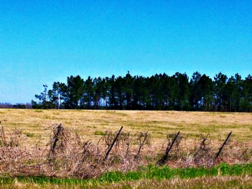 89+/- Acres Banks Brannen Farm : Statesboro : Bulloch County : Georgia