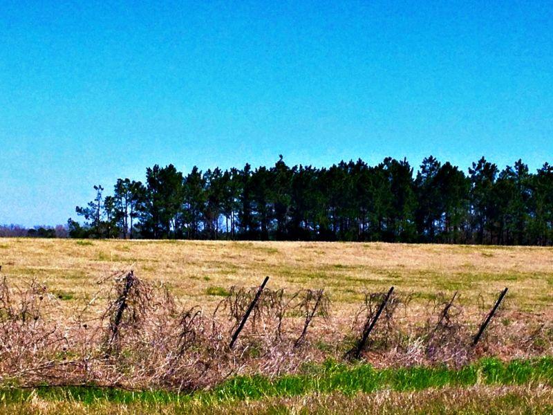 89+/- Acres Banks Brannen Farm : Statesboro : Bulloch County : Georgia