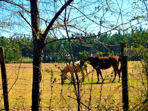 39+/- Acres Banks Hamilton Farm : Statesboro : Bulloch County : Georgia