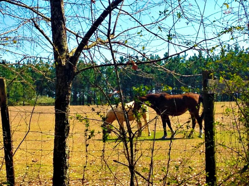 39+/- Acres Banks Hamilton Farm : Statesboro : Bulloch County : Georgia