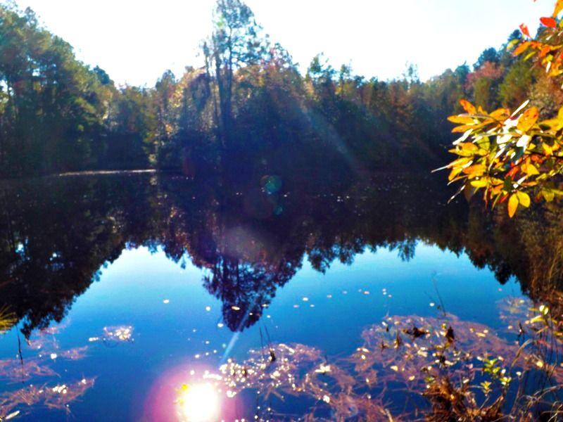 Painters Pond : Sylvania : Screven County : Georgia