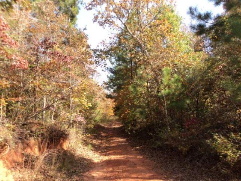 77+/- Acres $1,200 Per Acre : Lineville : Clay County : Alabama