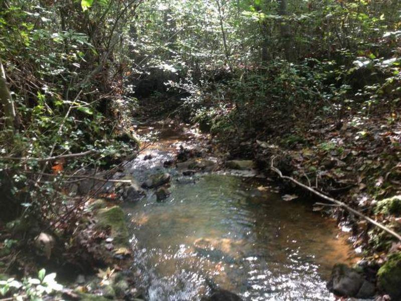 77+/- Acre Farm W/creek : Ranburne : Cleburne County : Alabama