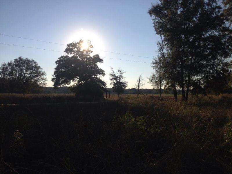 52 Acres : Society Hill : Chesterfield County : South Carolina