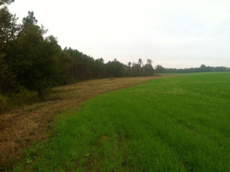 Timber, Row Crops, Ponds, And Cabin : Abbeville : Wilcox County : Georgia