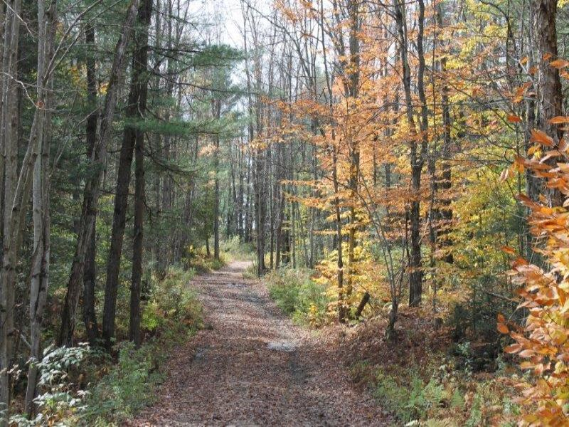 Private Approved Building Lot : Diana : Lewis County : New York
