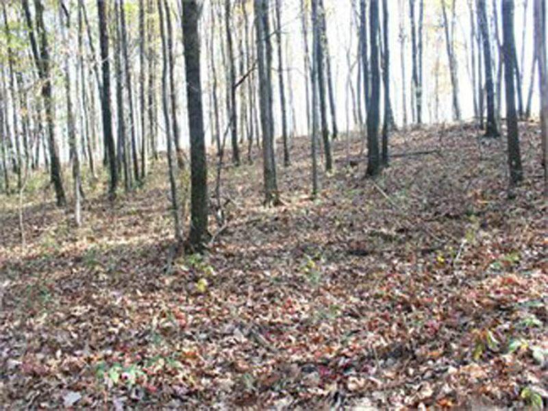 7.3 Acres Land Auction (parcel 3) : Bloomsburg : Columbia County : Pennsylvania