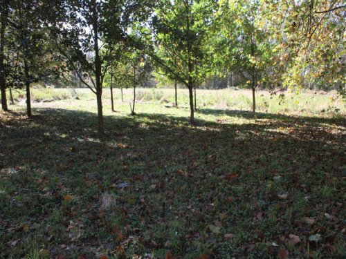 9 +/- Acre Land : Orangeville : Columbia County : Pennsylvania