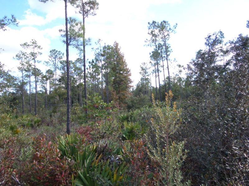8 Acres In Private Area : Mt Pleasant : Wayne County : Georgia