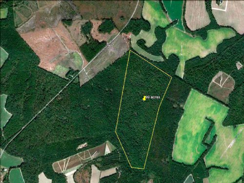 Low Country Hunting Land 99 Acres : Sycamore : Allendale County : South Carolina