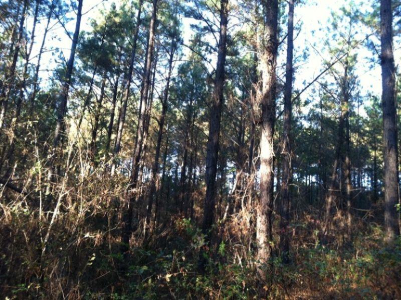 Morris Majestic Tract : Morris : Jefferson County : Alabama