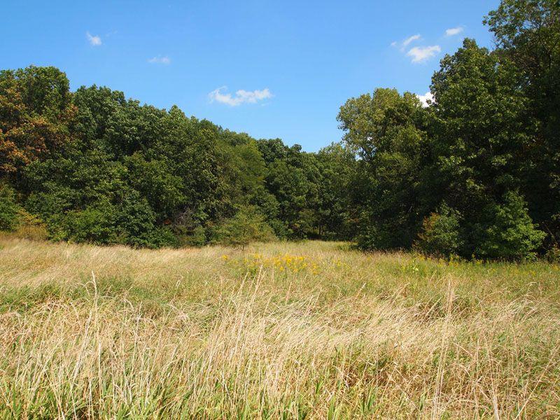 187 Acres Affordable Hunting Farm : Birmingham : Schuyler County : Illinois