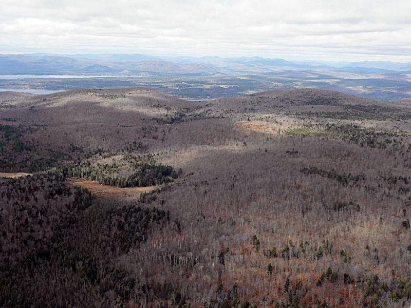 Burnt Mill Forest : Edinburg : Saratoga County : New York