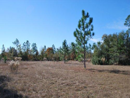 Gentleman Farm 36 Acres High & Dry : Screven : Wayne County : Georgia