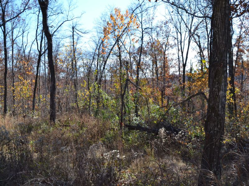 40 Acres Of Hunting Land : Mountain View : Stone County : Arkansas
