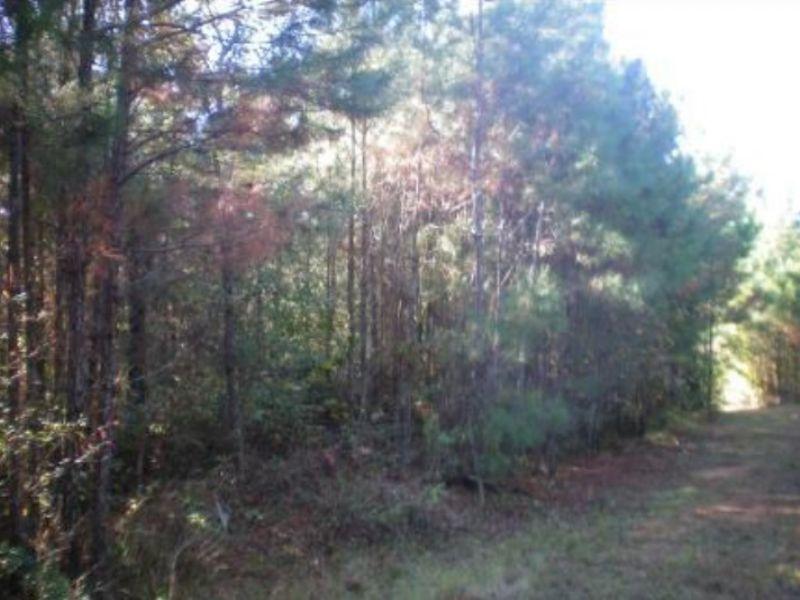 89 Acres Natchez Trace Frontage : Canton : Madison County : Mississippi
