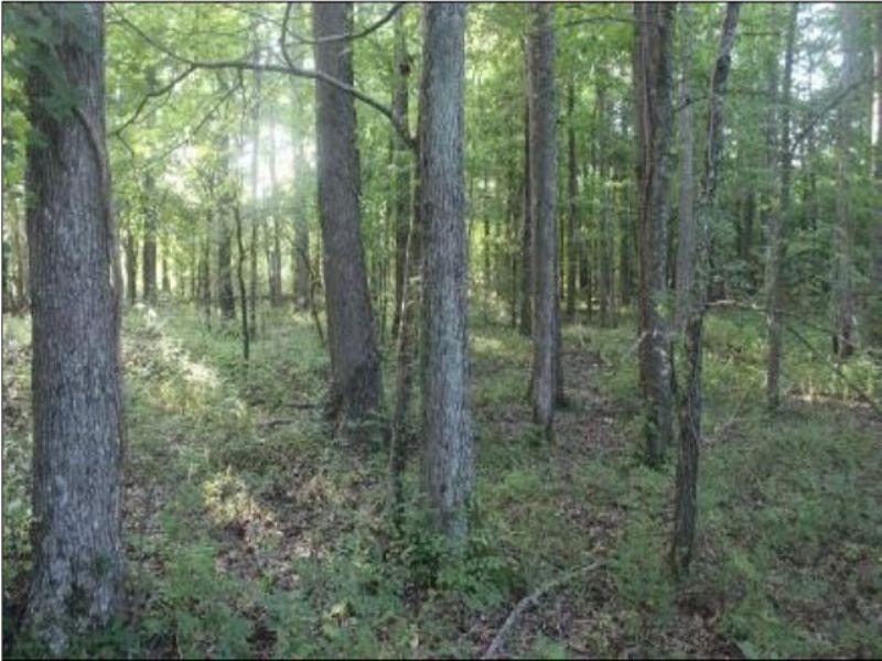 75 Acres Of Paradise : Canton : Madison County : Mississippi