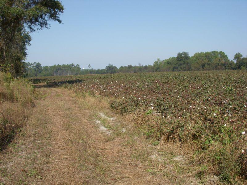 87+/- Acres Hartley Road Farm : Alamo : Wheeler County : Georgia