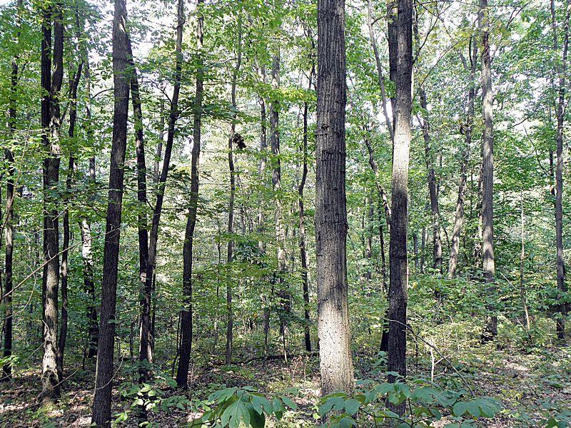 Danville Forest : Valley Township : Montour County : Pennsylvania