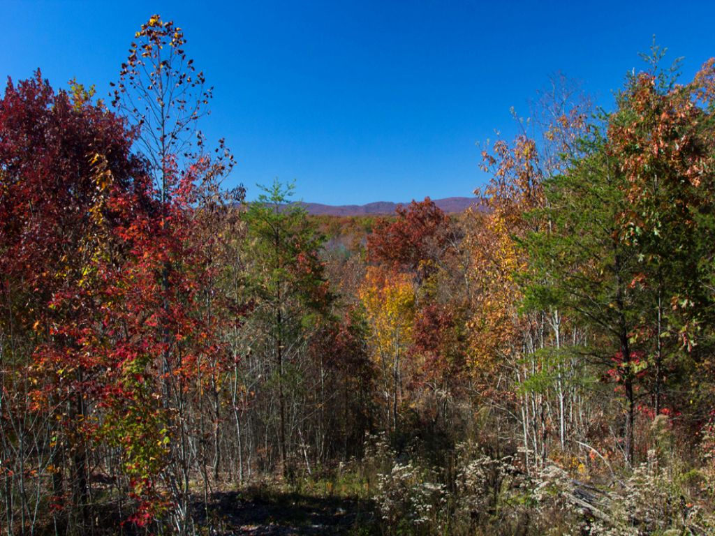 10.3 Acres With Cabin Only $95,000 : Grandview : Rhea County : Tennessee