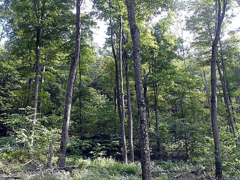 Red Rock Forest One : Fairmount : Luzerne County : Pennsylvania