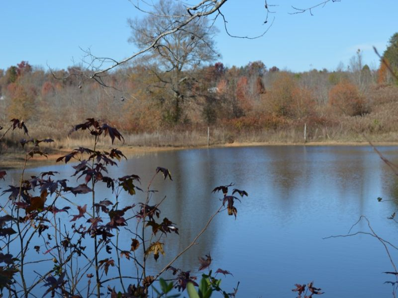 52 Acres In Blue Ridge Community : Greer : Greenville County : South Carolina