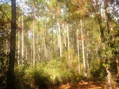 151 Acres Merchantable Timber : Patterson : Pierce County : Georgia
