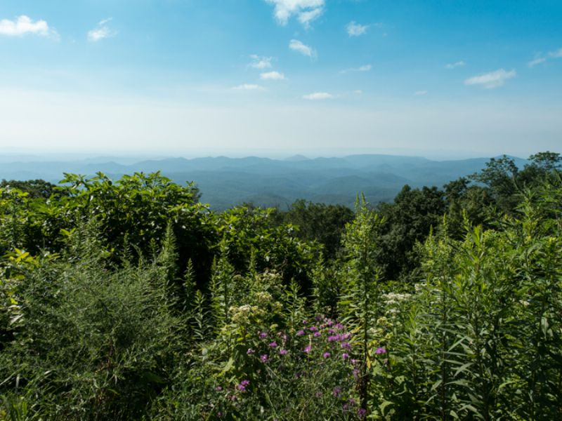 Exclusive Nc Mountain Tracts : $2400 Per Acre : Caldwell County : North Carolina