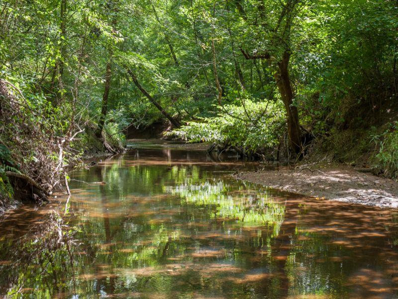 Wolf Island Creek Farm- South : Reidsville : Rockingham County : North Carolina
