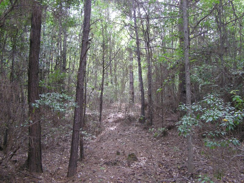 Helicon 16.5 Acres : Grady : Crenshaw County : Alabama