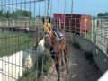 40+/- Acre Horse Farm Opelousas, La