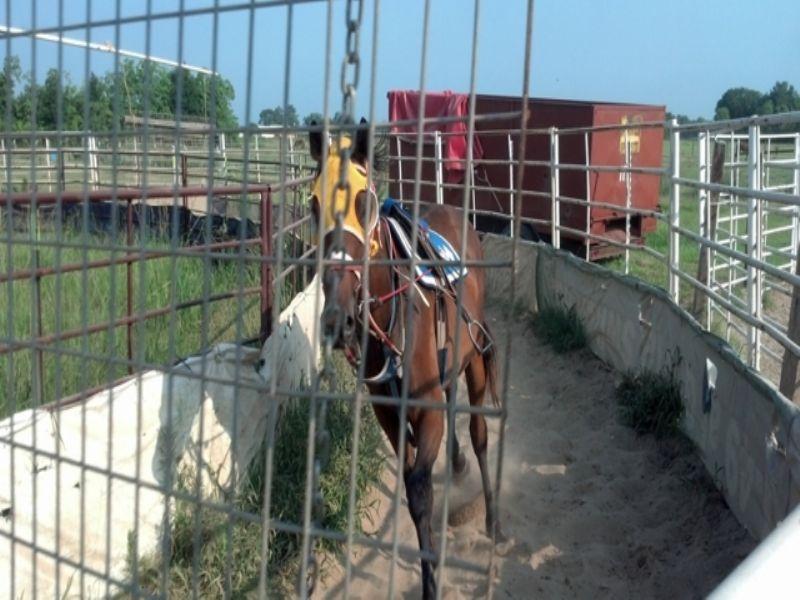 40+/- Acre Horse Farm Opelousas, La : Opelousas : Saint Landry Parish : Louisiana