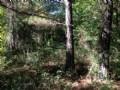 15.72 Acres East Of Leaf River
