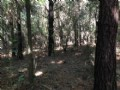 28.99 Acre Recreational Investment