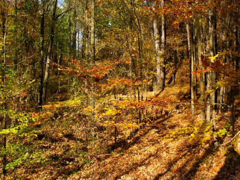 65 Acres With Beautiful Lake : Drakesboro : Muhlenberg County : Kentucky