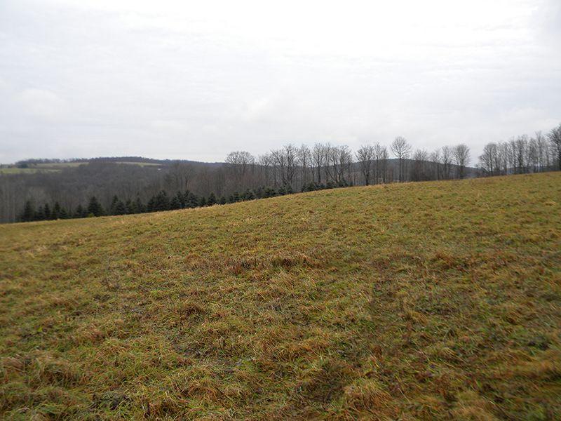 14 Acres Farmland Raise Livestock : Solon : Cortland County : New York