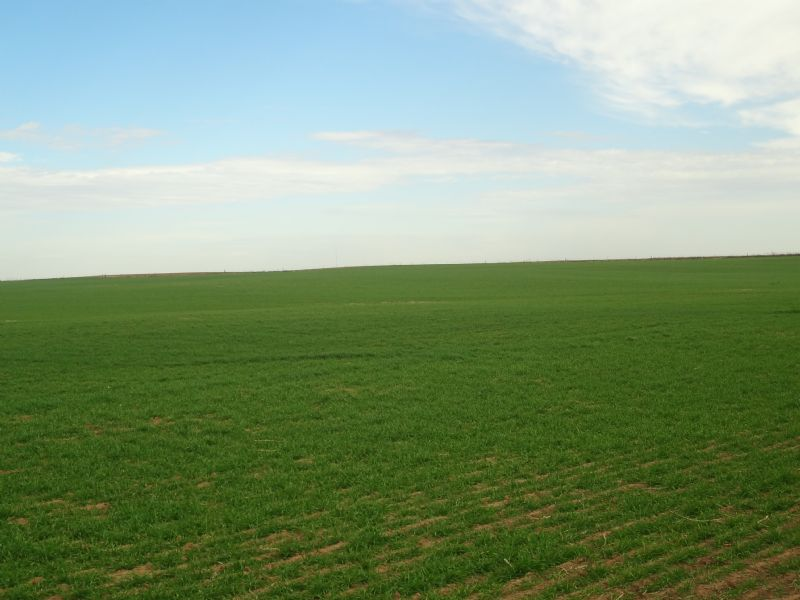 160± Acres * Cattle Farm * Cropland : Carrier : Garfield County : Oklahoma